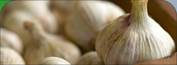Garlic literature review